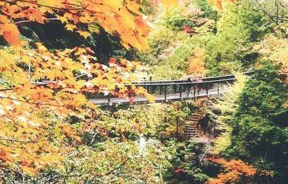 2018年、イベント、奈良県、天川村、11月、参加型イベント、体験、食、もみじまつり。