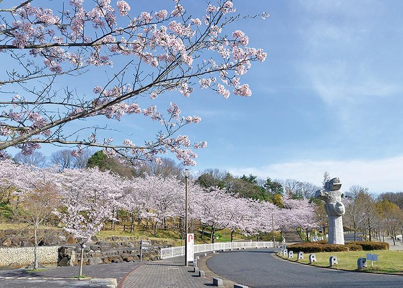 桜、お花見、生駒山麓公園、奈良っこ、奈良。