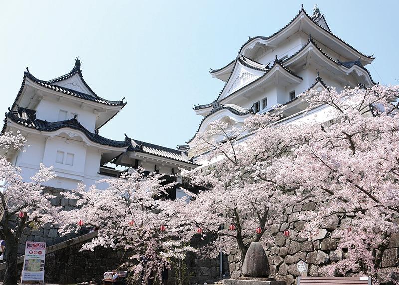 桜、お花見、上野城、奈良っこ、奈良。