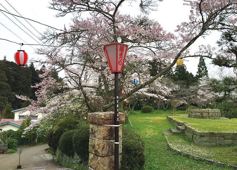 桜、お花見、柳生、奈良っこ、奈良。
