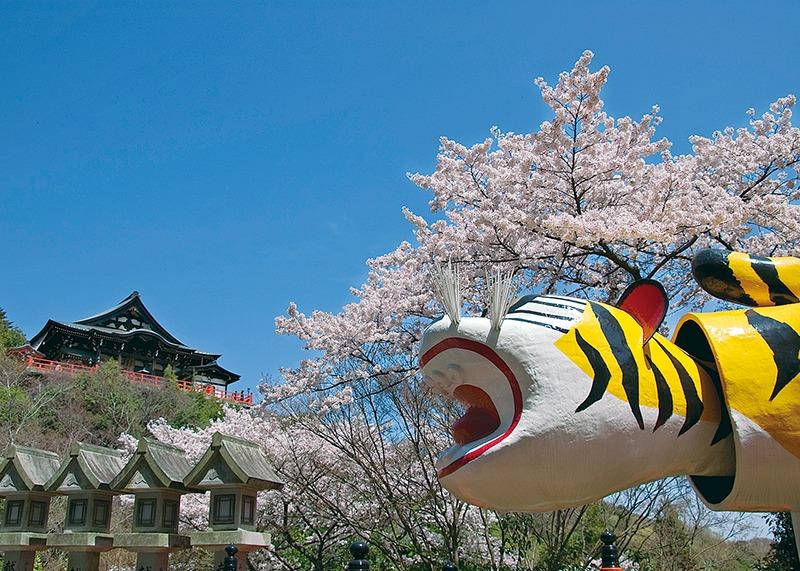 桜、お花見、信貴山朝護孫子寺、奈良っこ、奈良。