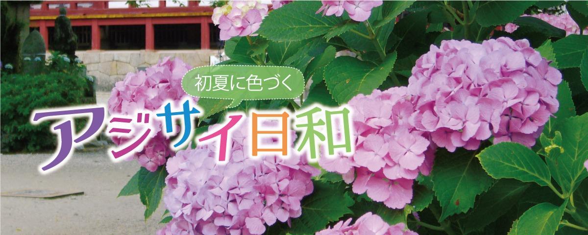 奈良のあじさい。吹く風も夏めき、初夏の訪れを感じる6月。 しとしとと降り続く長雨の中、彩りを添える アジサイがもうすぐ見頃♫