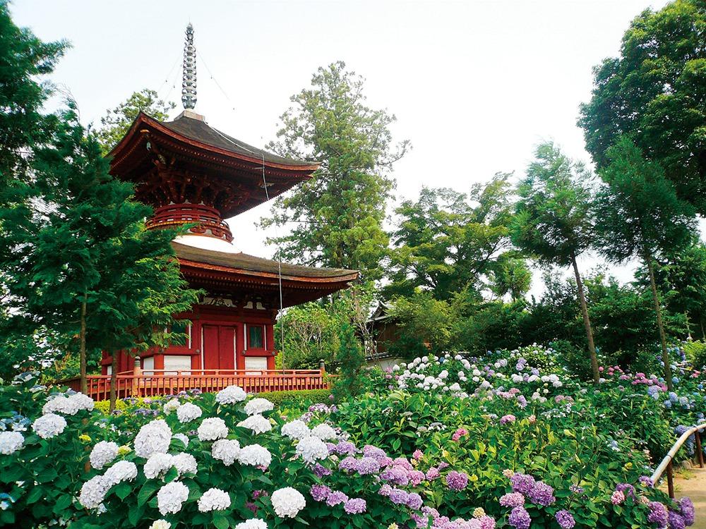 奈良っこ、久米寺、橿原市。